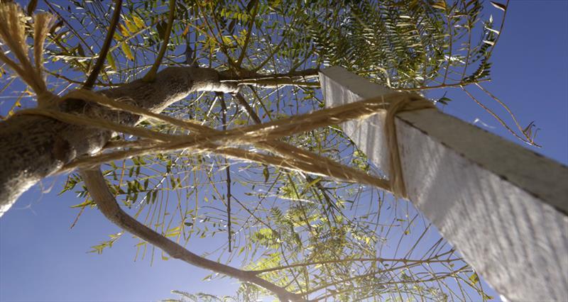 População de Campo Grande pode monitorar árvores pela internet